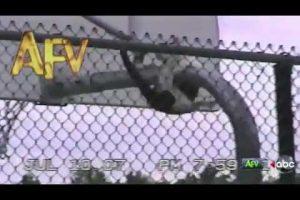 Epic Cat Gymnast Imitates Fireman