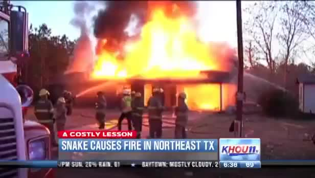 Woman Burns Down House to Kill Snake