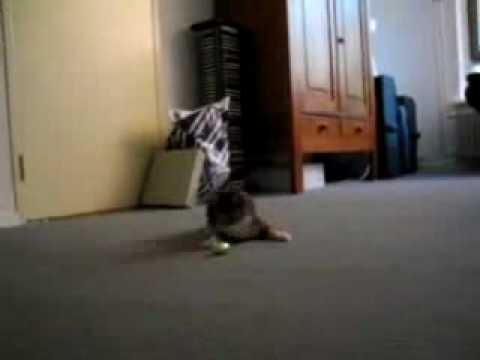 Kitten vs. Easter Egg