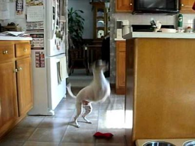 Dog Excited about Dinner