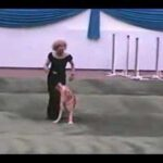 Dog & Owner Performs a Grease Dance Routine