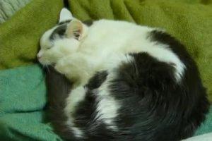 cat-accordion thumbnail