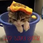 Epic Cats Compilation