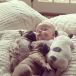 Adorable Baby with Bulldog Puppies (11 pics)