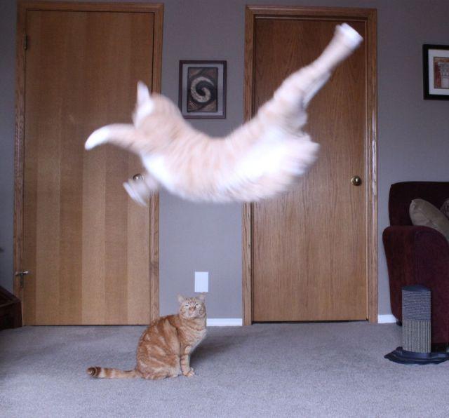 Funny Animals 89 52 Pics 1funny Com