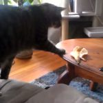 Cat Scared of Banana Peel