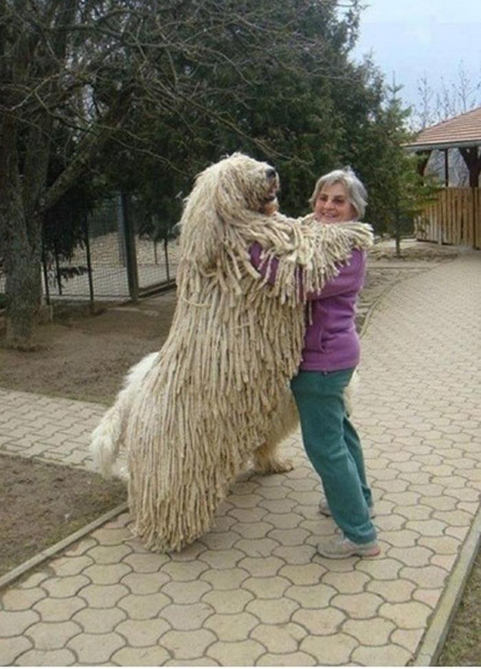 Huge Dogs (12 pics) – 1Funny.com