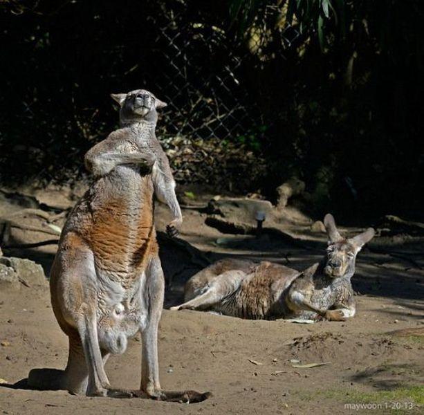 Funny Animals 100 46 Pics 1funny Com