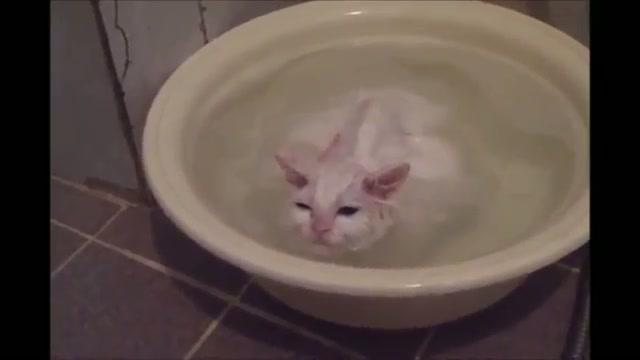 Kitten Refuses to Leave Warm Bath