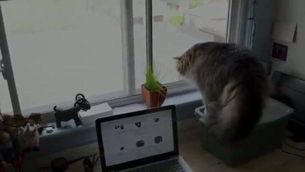Cat Scares Cat