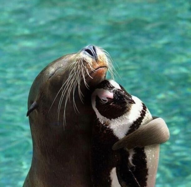 these_funny_animals_1244_640_03