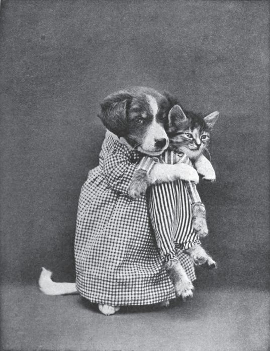 Old Novelty Photos Of Cats And Dogs  37 Pics   U2013 1funny Com