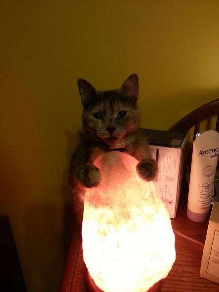 1000+ images about Sal del Himalaya on Pinterest Himalayan salt, Salud and Himalayan salt lamp