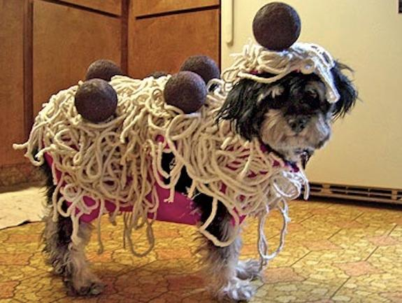 alettertomydog-1 ... : cute puppy costumes  - Germanpascual.Com