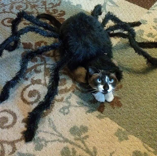 Cute Puppy Halloween Costumes