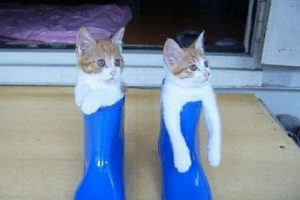 these_funny_animals_1304_640_37