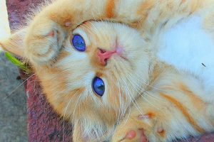 these_funny_animals_1310_640_25