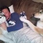 Jealous Dog Demands More Attention