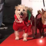 Holiday Fashion Show for Shelter Dogs and Cats