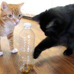 5 Life Hacks Fur Cat Owners