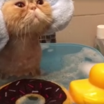 Cat Loves the Spa Treatment