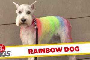 Dog-Has-Rainbow-Fur