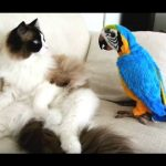 Funny Parrots Annoying Cats Compilation