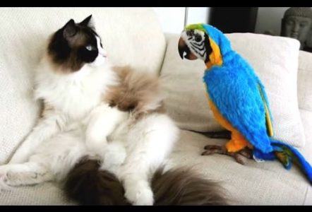 Funny-Parrots-Annoying-Cats-Compilation-NEW-HD