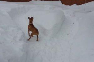 Smart-Dog-Tricks-Boxer-into-Exercising