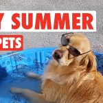 Summer Body Pets Compilation 2016