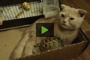 cat-turtle-friendship
