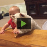 Dog and Baby's Epic Showdown for Last Piece of Chicken