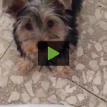 Money-Hungry Puppy Snatches Owner's Cash