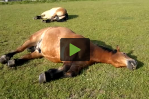 snoring-horses