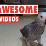 13 Funny Bird Videos