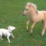 Baby Horse And Puppy Playing Together