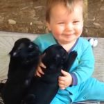 Baby Pugs Give Little Boy All The Kisses