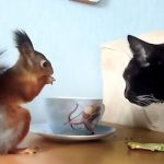 Cat And Rescue Squirrel Love Sharing Breakfast