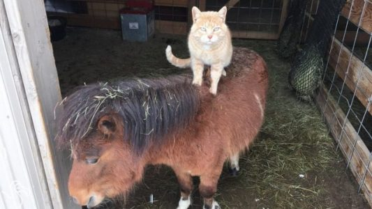 Cat-Loves-Riding-Every-Animal-On-His-Farm