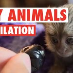 Cute Tiny Animals Compilation 2016