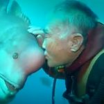 Diver Befriends Fish And Visits Him For Decades