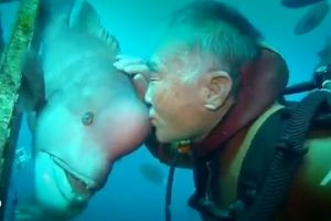 Diver-Befriends-Fish-And-Visits-Him-For-Decades