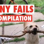 Funny Dogs And Cats