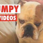 Funny Grumpy Dogs 2016