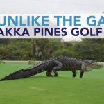 Gigantic Alligator Casually Walks Across Florida Golf Course