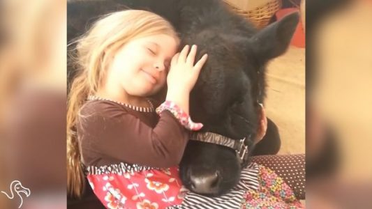 Little-Girl-Breaks-The-Rules-To-Let-Her-Cow-In-The-House