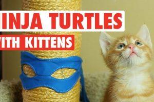 Ninja-Turtles-Cute-Kitten-Version