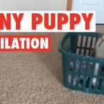 Puppies! Puppies! Puppies! Compilation 2016