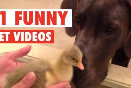 11-Funny-Pet-Videos-Compilation-2016