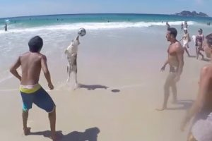 Adorable-Dog-Playing-Volley-Ball-At-Beach-Amazing-Video